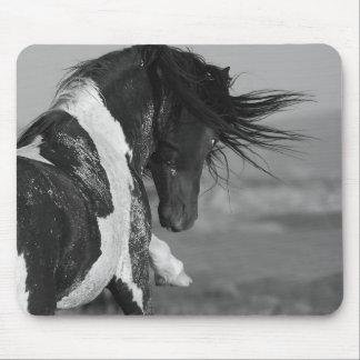 Black & White Stallion Strikes Wild Horse Mousepad
