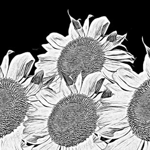 Black And White Sunflowers Stickers Zazzle