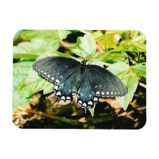 Black White Swallowtail Butterfly Photo Magnets