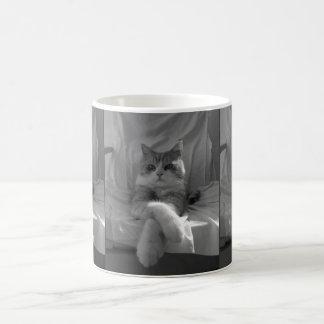 Black White Tabby Cat photo Classic White Coffee Mug
