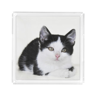 Black White Thoughtful Kitten Acrylic Serving Tray Square Serving Trays
