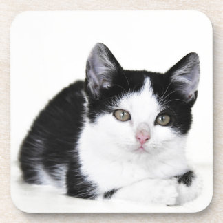 Black White Thoughtful Kitten Coasters
