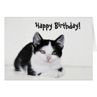 Black White Thoughtful Kitten Greeting Card
