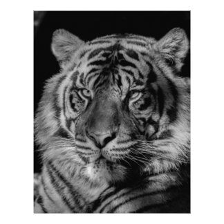 Black & White Tiger Letterhead