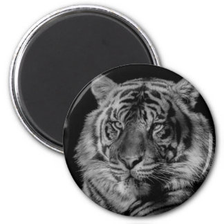 Black & White Tiger Magnet