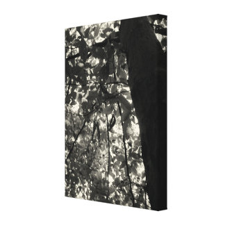 Black & White Tree & Leaves Gallery Wrapped Canvas