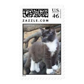 Black White Tuxedo Kitten Postage