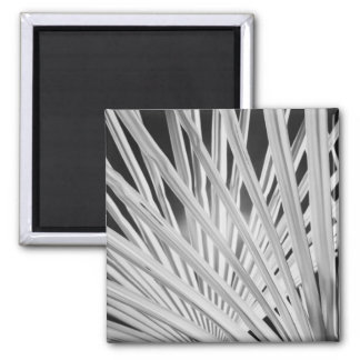 Black & White view of palm tree fronds 2 Inch Square Magnet