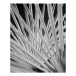 Black & White view of palm tree fronds Posters