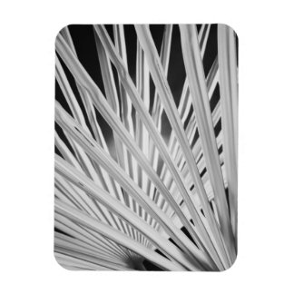 Black & White view of palm tree fronds Magnet