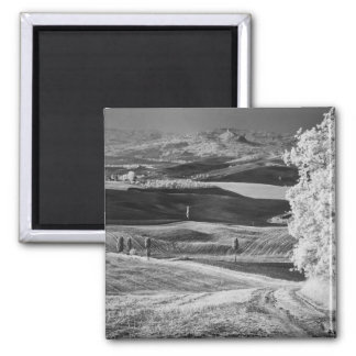 Black & White view of winding road Refrigerator Magnets