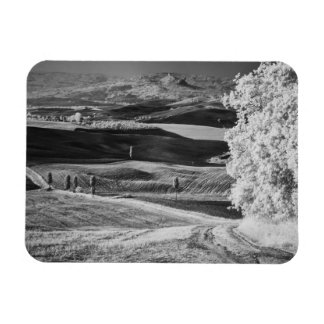 Black & White view of winding road Magnet