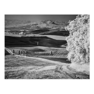 Black & White view of winding road Postcard
