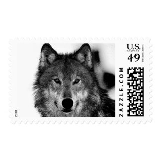 Black & White Wild Wolf Postage Stamp