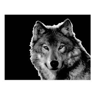 Black & White Wolf Artwork Postcard