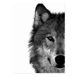 Black & White Wolf Eye Artwork Postcard