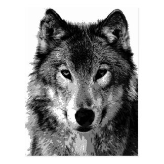 Black & White Wolf Portrait Postcard