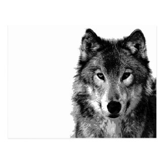 Black & White Wolf Portrait Postcard