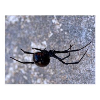 Black Widow 296 Postcard