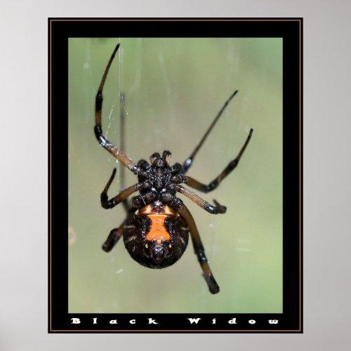 ORIGAMI SPIDERS