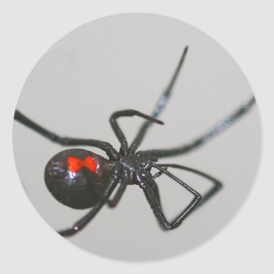 Black widow spider classic round sticker zazzle com