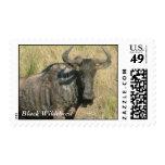 Black Wildebeest Postage Stamp