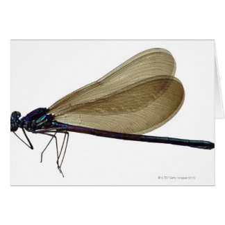Black-winged damselfly card