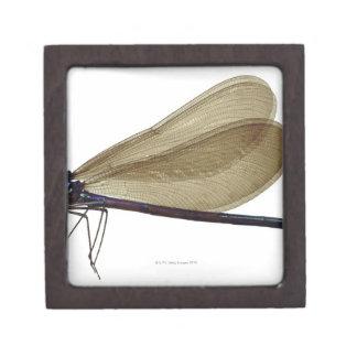 Black-winged damselfly gift box