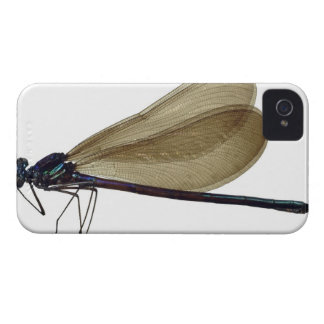 Black-winged damselfly iPhone 4 cover