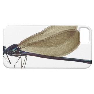 Black-winged damselfly iPhone SE/5/5s case