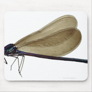 Black-winged damselfly mouse pad