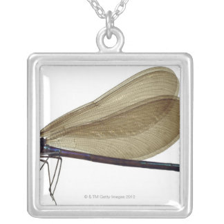 Black-winged damselfly silver plated necklace