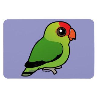 Black-winged Lovebird Magnet