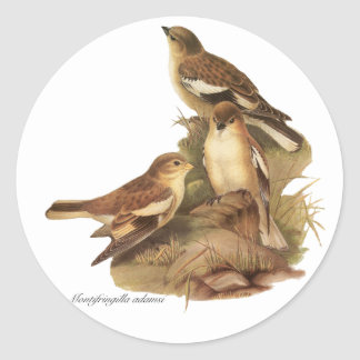 Black-winged Snowfinch Classic Round Sticker