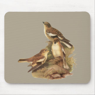 Black-winged Snowfinch Mouse Pad
