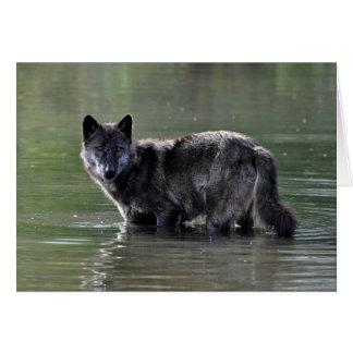 Black Wolf Greeting Card