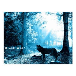 Black Wolf Post Card