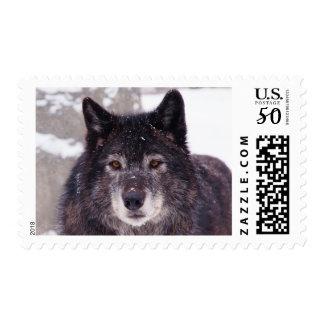 Black wolf postage stamp