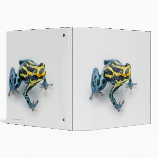 Black, Yellow and Blue Poison Dart Frog Binders
