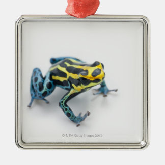 Black, Yellow and Blue Poison Dart Frog Metal Ornament