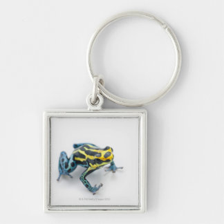 Black, Yellow and Blue Poison Dart Frog Silver-Colored Square Keychain