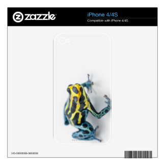 Black, Yellow and Blue Poison Dart Frog Skin For iPhone 4S