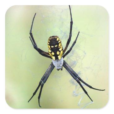 Halloween Themed Black & Yellow Argiope Garden Spider Sticker