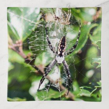 Black & Yellow Argiope Garden Spider Trinket Tray