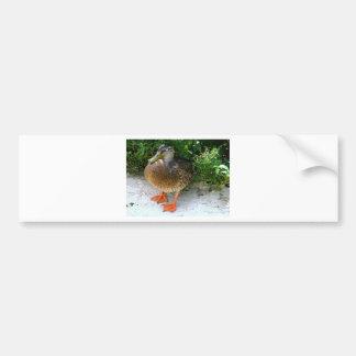 Black & Yellow toned Bird with Orange Feet Bumper Sticker
