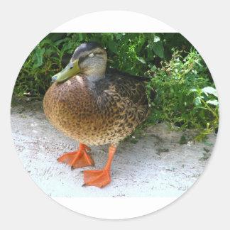 Black & Yellow toned Bird with Orange Feet Round Sticker