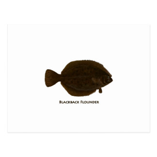 Blackback Flounder Postcards
