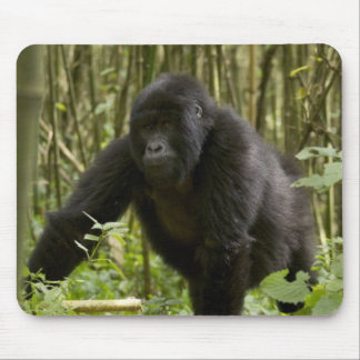 Blackback walking through bamboo forest mouse pad