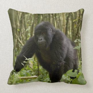 Blackback walking through bamboo forest throw pillows