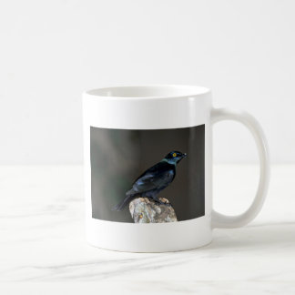 Blackbellied Glossy Starling Coffee Mug